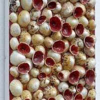 Red Shells on Canvas | Limpet Shell Art Picture | John Black